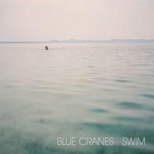 blue cranes swim